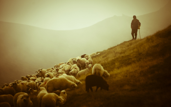 shepherd-in-romania-photo-by-stabmixer-2010